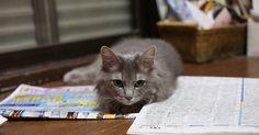 Que vous soyez depuis peu l'heureux propriétaire d'un petit chaton qui ne sait pas encore à quoi sert une litière ou que vous ayez un chat adulte qui n'a jamais été propre ou qui ne l'est plus, la question de la propreté demeure centrale et peut causer bien des inquiétudes et incertitudes.