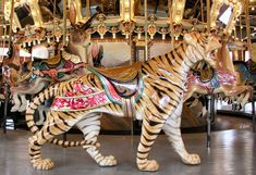 Dentzel Outside Row Tiger.   The 1921 Dentzel Carousel at Glen Echo Park in Glen Echo, MD. Model: Menagerie