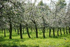 cidre denormandie   Cidre Normand cidre Normandie cidre fermier calvados pommeau Domaine ...