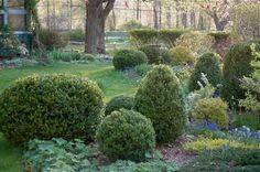 trimmed topiaries in a berkshires garden via gardenista