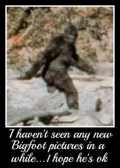 Hard physical evidence exist today showing that Big Foot is really Neanderthal Man misidentified by humans. The US Government has documented proof (FBI) Big Foot is a unidentified hominid species. Hominid Species, Bigfoot Birthday, Bigfoot Pictures, Finding Bigfoot, Cool Pictures, Funny Pictures, Bigfoot Sasquatch, Aliens And Ufos, Cryptozoology