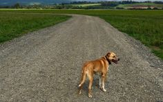My Pet: The Gift My Dogs Gave Me - #BetterwithPets