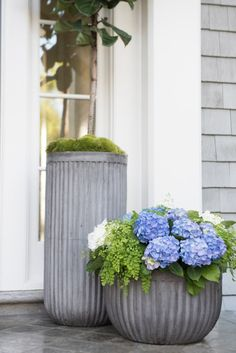 hydrangeas + maiden hair ferns