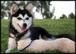 Breeders of Alaskan Klee Kai, A bunch of states