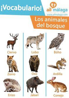 vocabulario animales del bosque