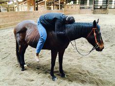 Warm thoroughbred hug.