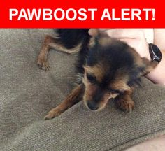 Is this your lost pet? Found in Tomball, TX 77375. Please spread the word so we can find the owner!  Brown and black chihuahua mix.  Please describe if your.  Nearest Address: Near Kendahlwood Ln & Dovewood Springs Ln