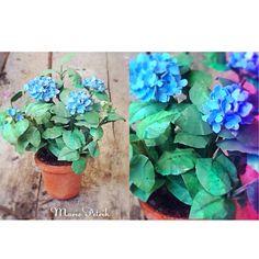Große Terrakotta-Topf überfüllt mit schönen blauen Hortensie Pflanzen. Handmade by Marie Petrik  Ca.: 2 1/2 Zoll hoch X 1-3/4 Zoll Wide