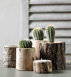 Planten in boomstammetjes
