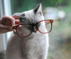 Nerdy cat :D