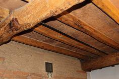 Formation diagnostic termites - repérage dans les logements de la présence d'insectes xylophages...