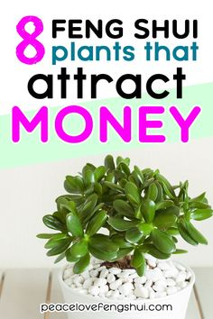 Add these 8 plants to your home to increase wealth, good luck, and abundance! Easy to care for feng shui wealth plants that attract money Plantes Feng Shui, Feng Shui Plants, Feng Shui Jade Plant, Feng Shui Office Plants, Feng Shui Garden Decor, Plants For Office, Feng Shui Wealth, Feng Shui Tips, Feng Shui Money Tree