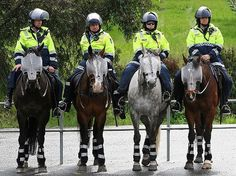 Police Horses equiped in riot gear