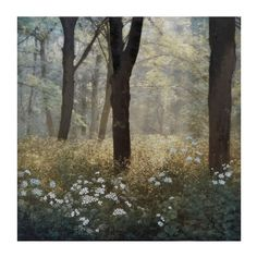 Morning in the Forest Canvas Art Print | Kirklands