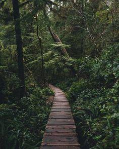 Vancouver Island Canada | Taylor Burk Photography