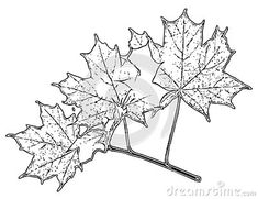 Illustration about Leaves Adult Children Coloring Book Black White Sketch Cartoon Children Anti-stress Relaxing Coloring. Illustration of butterfly, black, children - 133226125 Adult Coloring, Coloring Books, Anti Stress, Adult Children, Moose Art, Sketch, Butterfly, Leaves, Cartoon