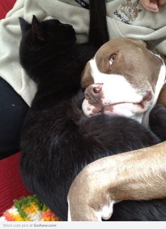 My dog has terminal cancer. I've noticed he and my cat have been cuddling a lot more since he got sick. - goaww.com