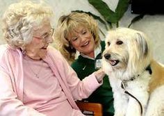 Elderly Companion Care: Pet Therapy to Boost Mood for Older Adults