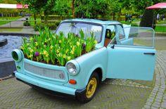 Ein Blumentopf mit Narzissen unter der Motorhaube eines Trabants