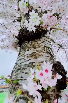 Beautiful Nature Scenes, Beautiful Sunset, Beautiful World, Beautiful Landscapes, Beautiful Flowers, Spring Pictures, Girly Pictures, Spring Scene, Fall Landscape