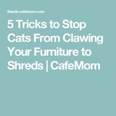 5 Tricks to Stop Cats From Clawing Your Furniture to Shreds | CafeMom