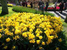 ... Flowers, Plants, Flora, Plant, Royal Icing Flowers, Flower, Florals, Bloemen, Planting