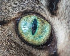 Andrew-Marttila-cats-eyes-6