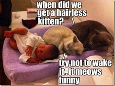 It meows funny.