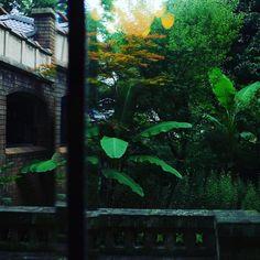 洋館とコロニアル風の植物のコンボって最強 #colonial botanical garden of the residence of Marquis M.