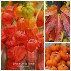 De tuin in het najaar. Alle bladeren en bloemen verkleuren naar warme herfst kleuren, de laatste vruchten hangen nog te pronken. Herfst op zijn mooist.