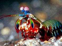 """I got: """"The Color Acuity Of A Mantis Shrimp!"""" (15 out of 15! ) - Which One Is Different? How Sharp Is Your Color Vision?"""