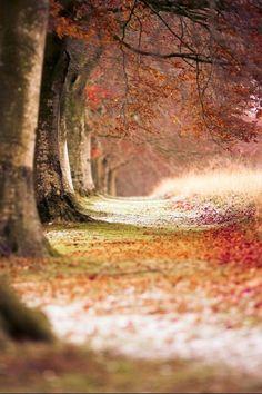 Walks of golden paths