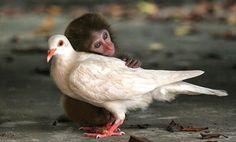 SandRamirez contra el maltrato animal. • www.luchandoporellos.es: LOS ANIMALES NO SOMOS COSAS.