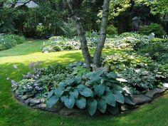 hosta plants care | How to Plant and Care for Shade-Loving Hostas