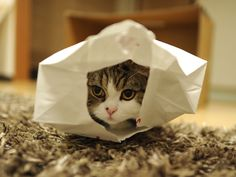 Fun with a paper bag.