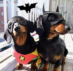 Batdog and Robin.  Our Dobey would look good as batman and he already has the ears for it