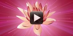 Wedding Title Background-Water Lily Flower Background Images, Free Video Background, Wedding Background, Green Screen Video Backgrounds, Flower Backgrounds, Wedding Titles, Wedding Album, Frame Download, Download Video