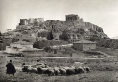 1903 ~ Sheep under the Acropolis of Athens (photo by Frederic Boissonnas) Athens Acropolis, Athens Greece, Greece Art, Old Pictures, Old Photos, Myconos, Greek History, Athens History, Greek Culture