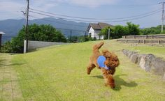 久しぶりのドッグラン3 | 2013.7.13