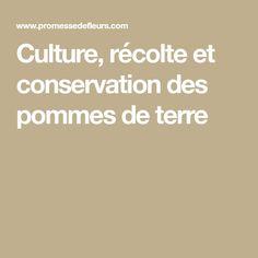 Culture, récolte et conservation des pommes de terre