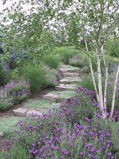 A beautiful, pensive walk... cool grays silver white to cool down hot patio mossy thyme & Spanish lavender here lend fragrance