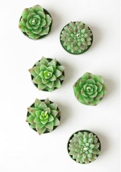 Succulent Tealight Candles from Threadsence - These are so adorable!