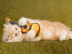 Kätzchen geht ab wie Schmitz Katze — Bild: Linn Currie  www.einfachtierisch.de