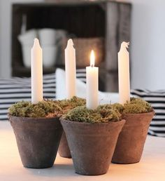 Fill clay plots with moss and insert candles.  Would make an excellent advent candle table centerpiece.