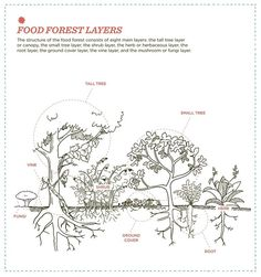 """Christopher Shein's """"The Vegetable Gardener's Guide to Permaculture"""" illustrates the structure of the food forest, which has eight main layers. Photo: Timber Press"""