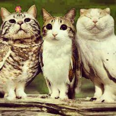meowls - Google Search