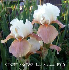 Sunset Snows (Stevens 1963)