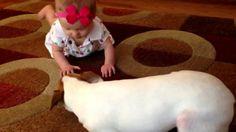 Dívány - Poronty - Cukiság: a kutya kúszni tanítja a babát