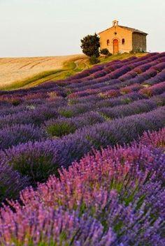 Chapel with lavender and grain fields, Plateau de Valensole, Pro - Stock , Lavender Fields France, Provence Lavender, Lavender Garden, French Lavender Fields, Roses Garden, Lavender Roses, Rose Flowers, Flowers Nature, Beautiful World