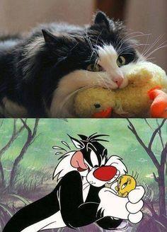 #humor #fotos #risas #divertidas #friki #chistes #bromas  Un claro ejemplo de la mala influencia de la televisón...  http://www.yougamebay.com